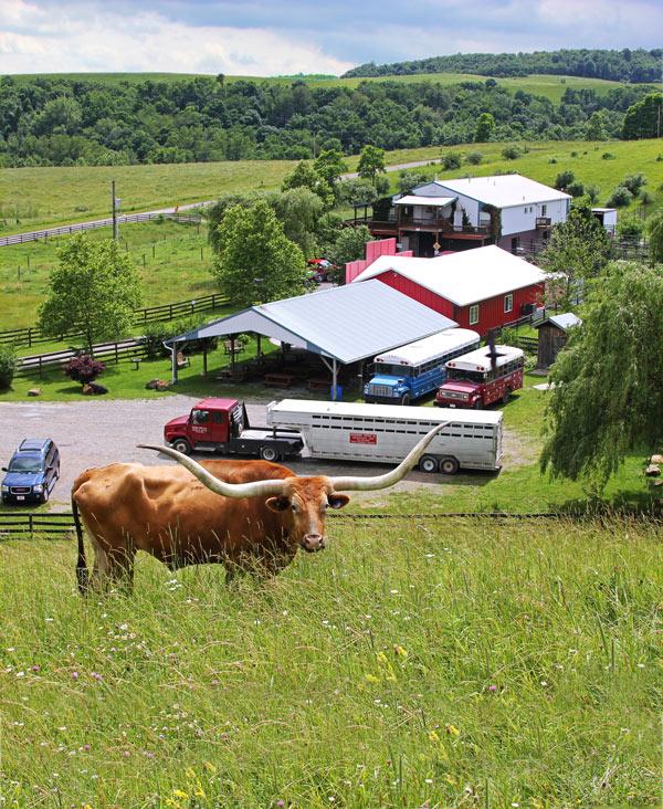 Buelingo Herd