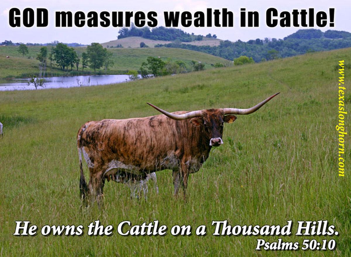 Wealth In Cattle