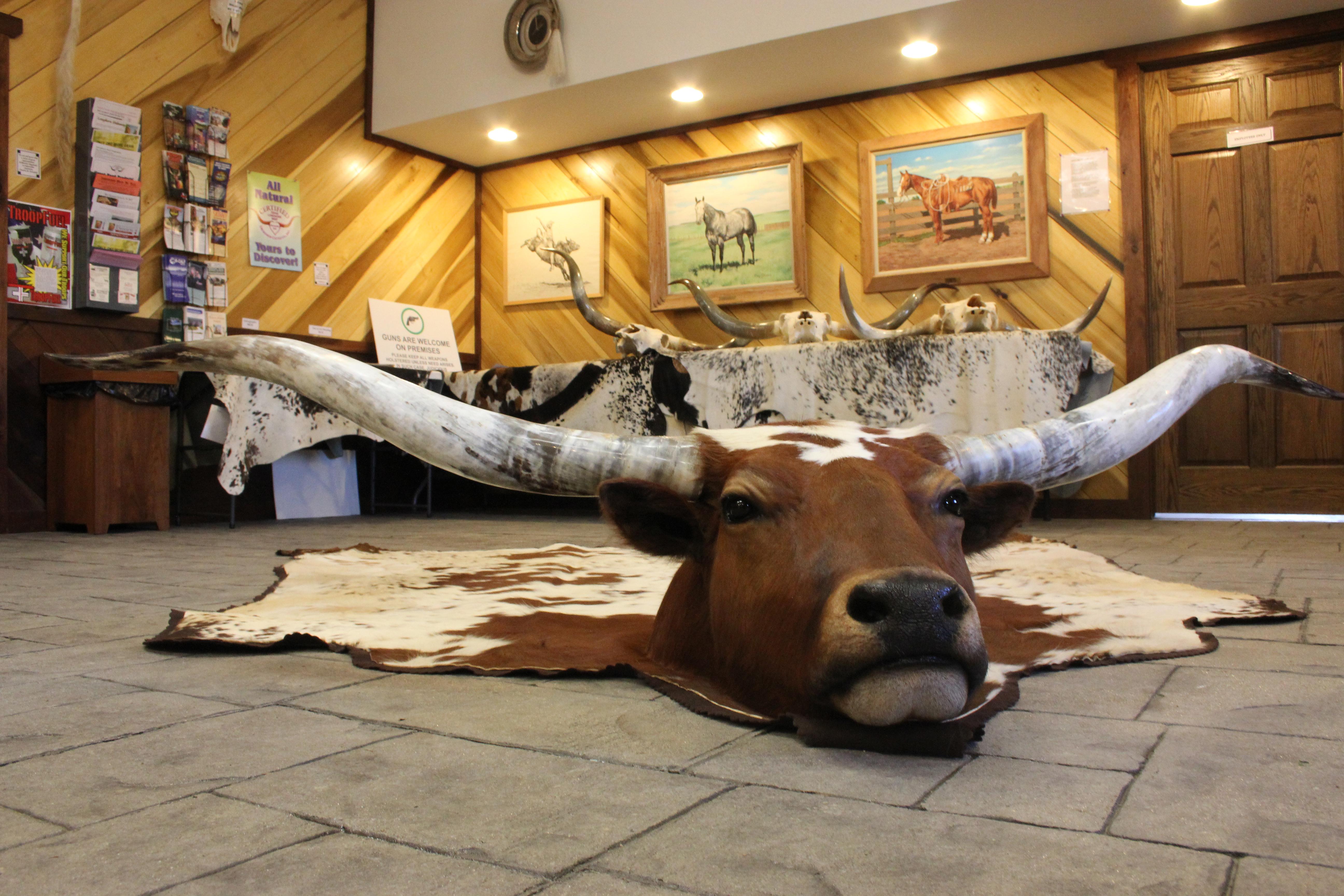 Y 9361 Longhorn Hide Rug Mount