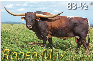 Rodeo Max