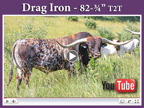 Drag Iron - YouTube Video