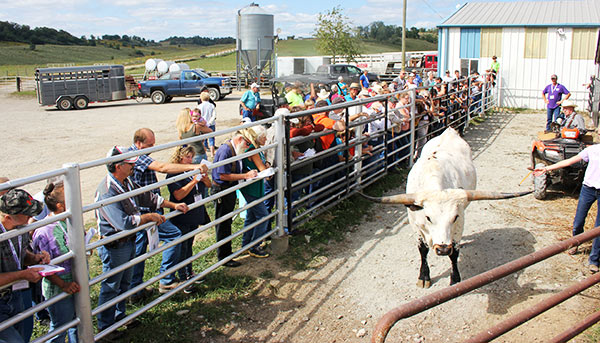 A cattle weight guessing contest was conducted by master cattleman Bill Farson