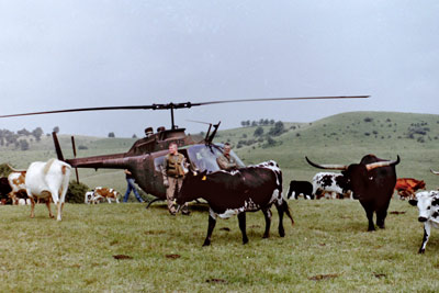 Helicopter with Texas Longhorns