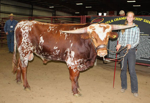 Drum Roll, 1st place Int. Bull and Reserve Champion, shown by Kara Dickinson, owned by Chad Dickinson, Georgetown, TX.