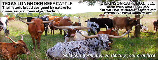 Dickinson Cattle Co - Banner