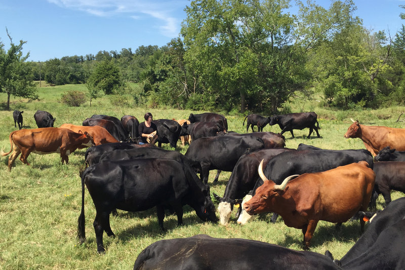 Susan Edmonson, a cattle rancher from Henryetta, Okla., with some of her cattle. Since last fall, cattle thieves have thinned her herd, one animal at a time -- a major financial blow for her farm.