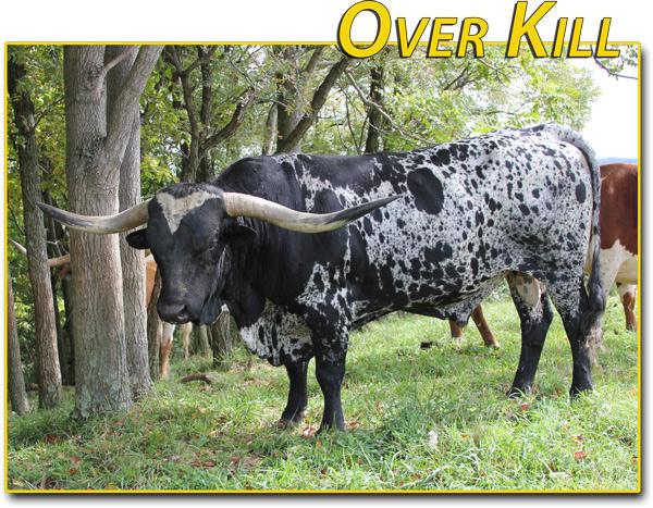 """Over Kill -- 80"""" semen $50"""