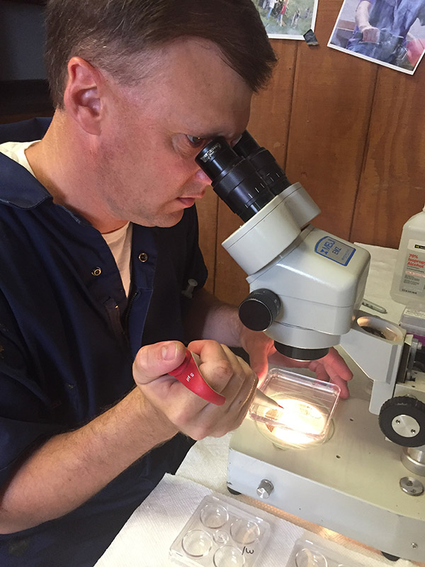 Dr. Nathan Steiner evaluates embryos for export from DCC collections.
