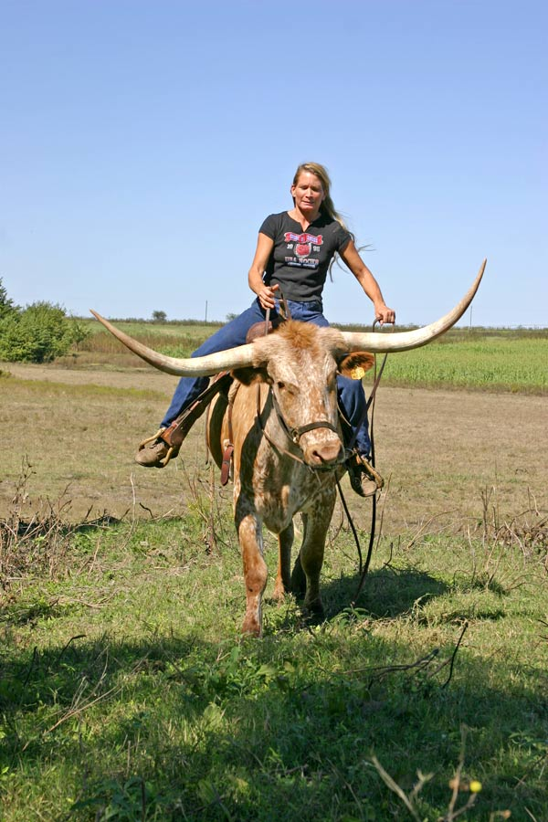 Texas Longhorn Cattle For Sale in Ohio | Dickinson Cattle Co