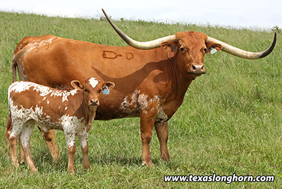 Bred_Cow - Top Suspect - Photo Number: d_2695.jpg