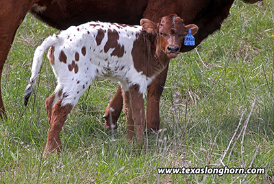 Dragon Fall Calf 2018 - Photo Number: e_0585.jpg
