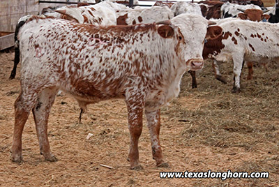 Fast Focus Calf 2018 - Photo Number: e_11206.jpg