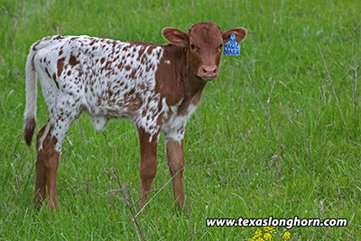 Magic Dragon Calf 2019 - Photo Number: f_2102.jpg