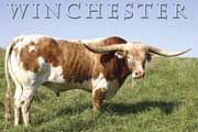 Winchester - I-228451 - winchester