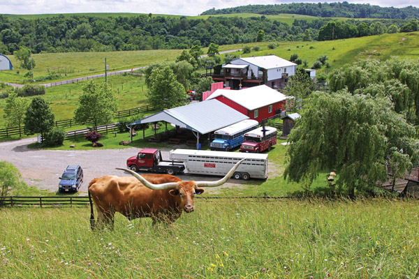 Longhorns Head To Tail Store and Tours