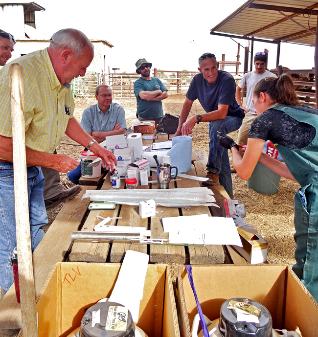 Caption: In the northern Gilboa Forest section of Israel, Dr. Em Mowrer (right) of Barnesville,Ohio prepares to implant Texas Longhorn embryos from Dickinson Cattle Co. The 10,000 acre Israeli ranch is managed by Erez Cahaner (dark blue shirt) who came to the USA to purchase new genetics for the arid desert ranch. This is one of the largest cattle operations in the eastern Mediterranean area.