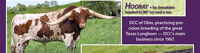 DCC of Ohio, practicing precision breeding of the great Texas Longhorn - DCC's main business since 1967.