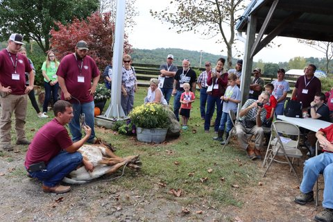 Doug Burris of DCC demonstrates the first day process of hog-tying, ear tagging, weighing, photographing, and bloodless castration of new born calves.