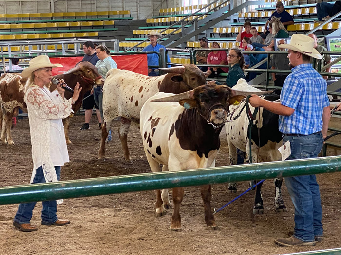 Open and halter show judge Lizz Huntzberry gives reasons for placing the DCC bull Boiling Point Grand Champion Intermediate Bull. Brody Carpenter of Barnesville exhibiting.