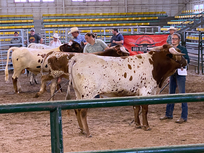 Dunn Step n Up shown by Eve Sabio for EJS Ranch won his division of the Buck Eye Futurity.