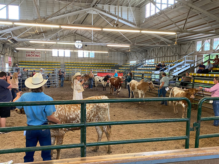 Judge Huntzberry gives reasons in the center of the arena or yearling heifers.