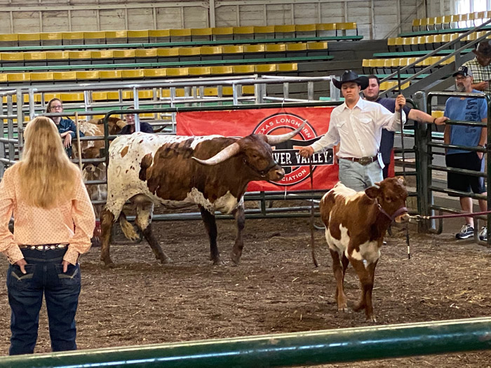 ITLA apprentice judge Gail Beach (L) watches Cut'n Flair shown by Grant Tinkis who later won the Haltered Jr Female Grand Champion.