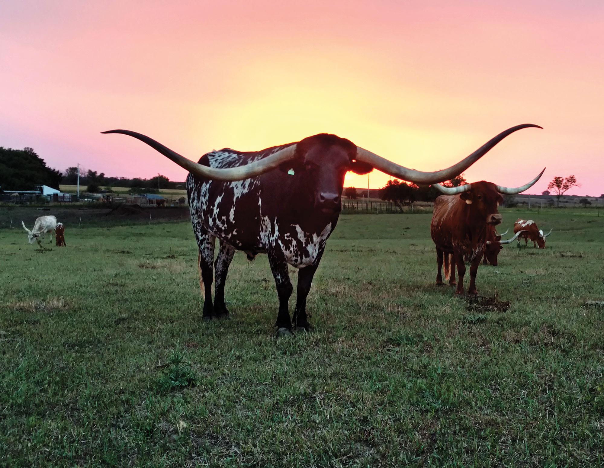 2018 Texas Longhorn Celebrity Calendar July