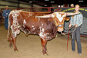 Bull-2015 - Drum Roll - Photo Number: 20161103-Drum-Roll.jpg