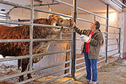 "Jamie Tomey giving ""Annex"" a treat at Longhorn Head To Tail Tours, near Barnesville, Ohio"