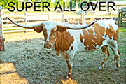 Super All Over - Super All Over - Super_All_Over