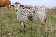 Willow Switch Calf 2014 - Willow Switch x Annex - 2014 Heifer - a_8678