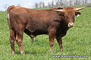 Bull-2017 - Pan Out - Photo Number: e_0804.jpg
