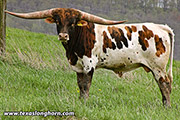 Texas Longhorn Reference_Sire - Drop Box - Photo Number: e_1108.jpg