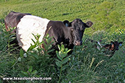 BueLingo Pair - Silk Power - Photo Number: e_3500.jpg