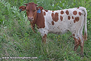 e_5518.jpg - Jam Packed x Cowboy Tuff Chex - 2018 Embryo Heifer