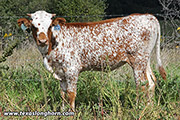 Dancing With Specks - Dancing Iron x Jet Lag - 2018 Heifer - e_7119