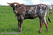 f_3096.jpg - Glad Hander x Flair Galore - 2018 Heifer