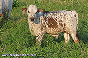 f_7427.jpg - Flair In The Sky x Hooray - 2019 Bull