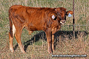 f_9227.jpg - Respected Iron x Cut'n Dried - 2019 Bull
