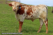 Annex Switch Calf 2019 - Line Switch - g_0815
