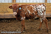 je_3154.jpg - Rodeo Time x Juma - 2018 Bull