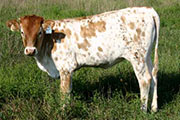 r_3509_s.jpg - Mostly High x Winchester - 2005 Heifer