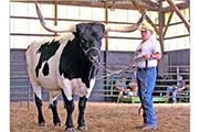 shakey_shadow.jpg - Shakey Shadow - Riding Steer