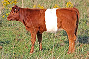 Dipular Calf 2011 - Dipular x Power Game - 2011 Heifer - x_6357