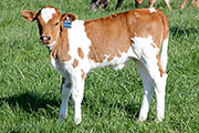 Clear Symbol - Unbounded Symbol x Clear Win - 2013 Heifer - z_2004
