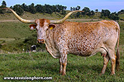 Texas Longhorn Dam - Marquee - Photo Number: z_8562.jpg